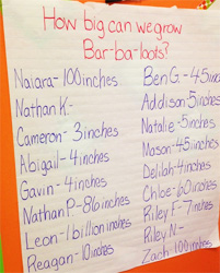Children charted their guesses of how many inches a Bar-ba-loot would grow
